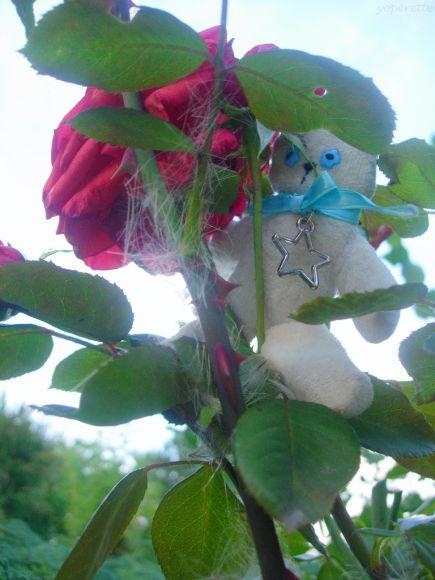 http://yoperette.cowblog.fr/images/ancien/DSCN0367.jpg