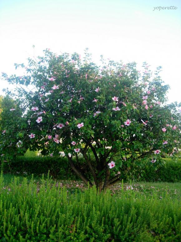 http://yoperette.cowblog.fr/images/ancien/DSCN5574.jpg
