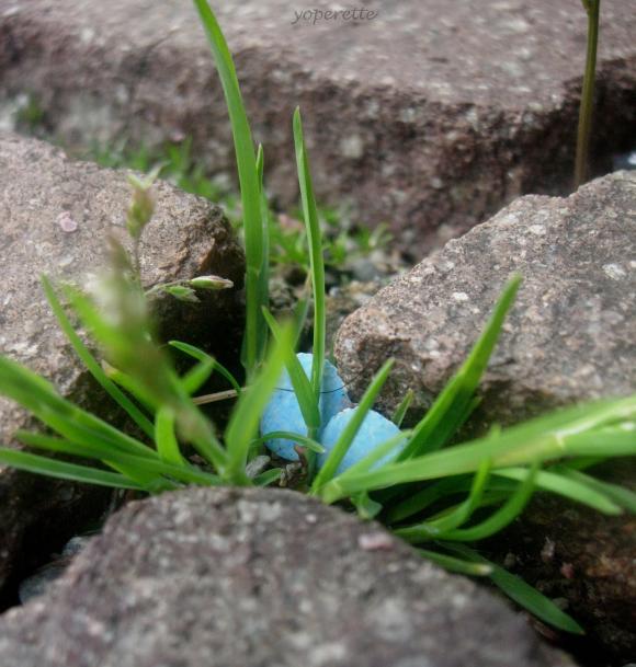http://yoperette.cowblog.fr/images/ancien/DSCN7839.jpg