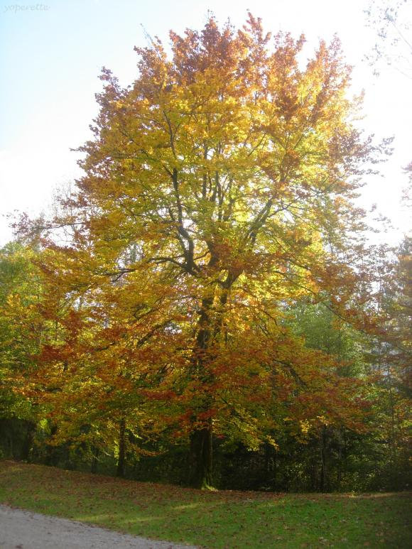 http://yoperette.cowblog.fr/images/ancien26novembre2010/DSCN0155.jpg