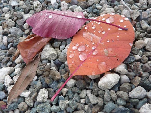 http://yoperette.cowblog.fr/images/ancien26novembre2010/P1020924.jpg